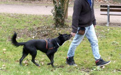 Promener son chien