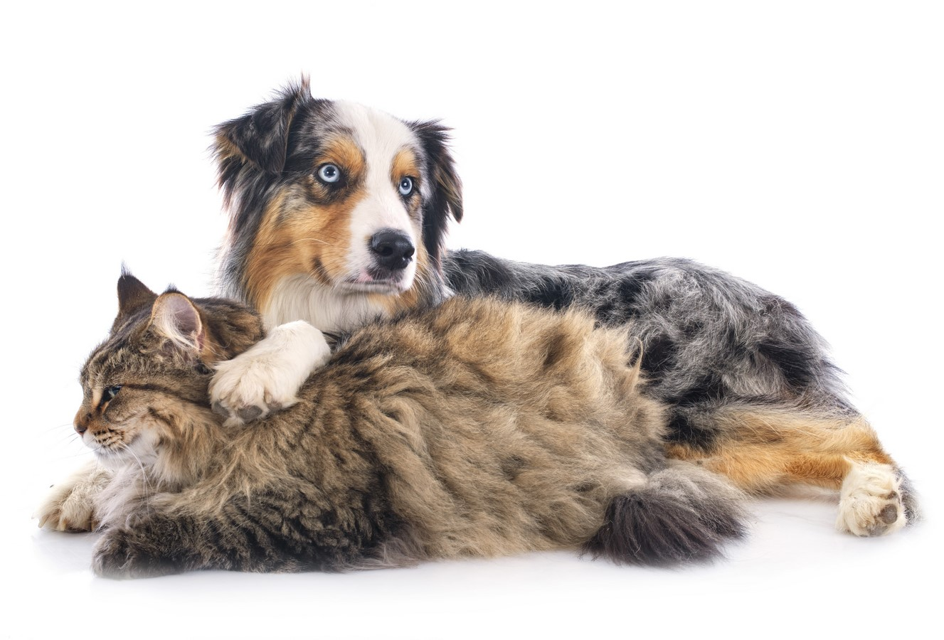 Communication intuitive animale Bas Rhin : Chien et chat