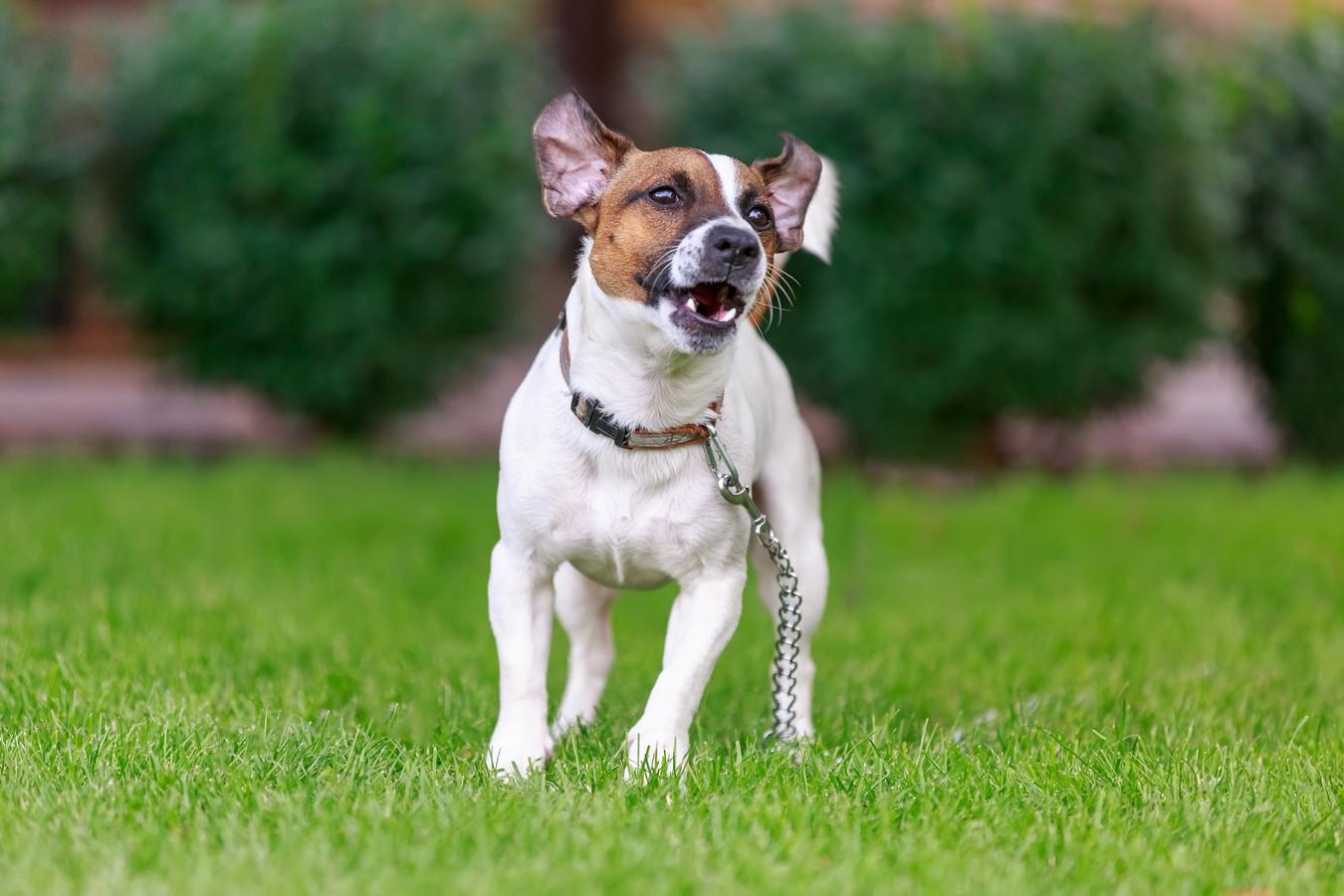 Comportementaliste canin dans le Bas-Rhin
